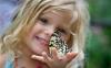 Салют из бабочек